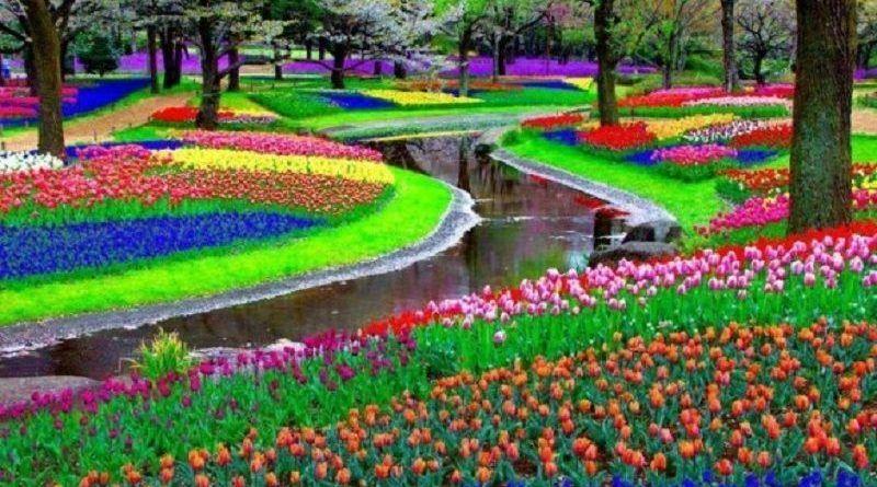 Parque-Keukenhof-Amestardão-Holanda-580x463